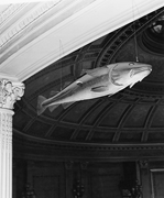 The Sacred Cod , pine carving of a New <b>England</b> codfish by an unknown artist...