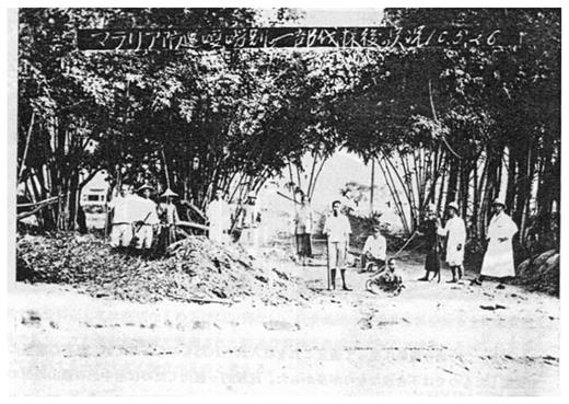Bamboo cutting in Taihoku State. From Morishita Kaoru, Mararia no ekigaku to yobô, (Kikuya shobô, 1976)