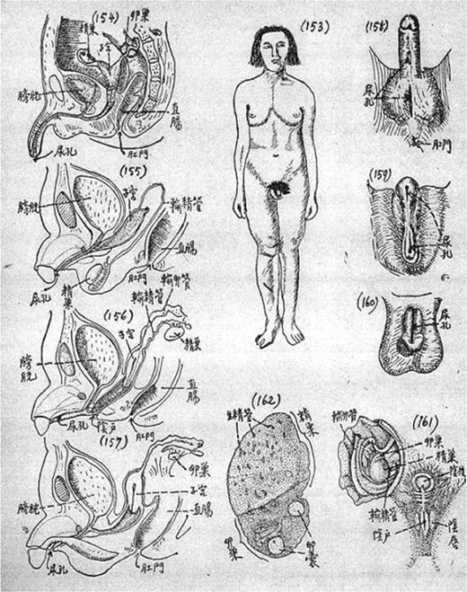 The appearances of sex transformations in human reproductive organs