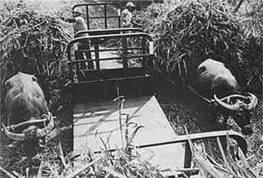 TSC transported materials mainly by sugar rail along with cattle carts in the 1950s. Photo cited from Chiu-Chen Lian (1981, p. 88)