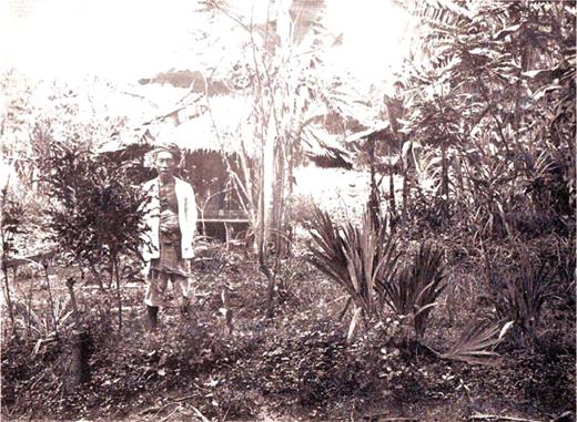"The garden of a dukun. The accompanying text states that ""the planting is chaotic, which can be seen clearly on this image."" Source Boorsma 1913"
