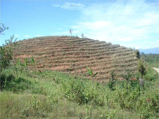 A degraded hillside is terraced and cultivated with a diversity of plants, with a view to its regeneration.