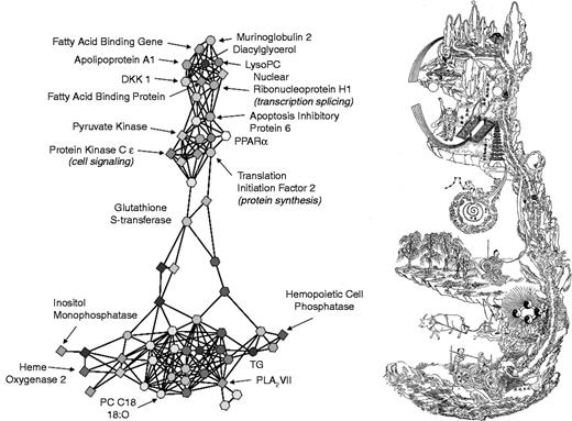 """Figure from van der Greef et al. (2010) depicting two ways to imagine the body as a landscape: """"Illustration of systems thinking in Western science and in the Chinese Taoist traditions. The left panel shows a network between metabolites, genes and proteins revealing the complex interactions related to the onset of atherosclerosis. The right panel shows the Neijing Tu, a chart of the inner landscape of the body from the White Clouds Taoist temple in Beijing. The Taoist Highest Clarity envisions the body as a complete world unto itself that is also a reflection of the world"""" (van der Greef et al. 2010: 2038)."""