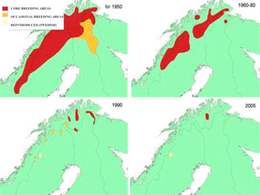Distribution of LWfG breeding areas in Norway, 1950-2005. Image © Norwegian Ornithological Society.