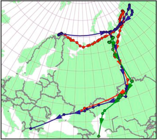 "Image ""Map showing the whole autumn migration of the satellite tagged lesser White-fronted Geese caught at the Valdak Marshes in May 2006. Red line shows the migration route of Imre (tagged 23 May) and the blue line shows the migration route of Finn and Nieida (tagged 18 May). Green line shows the migration of a pair of Lesser White-fronted Geese caught and tagged during the moult in the Polar Ural (Russia) in July 2006."" Image © Norwegian Ornithological Society."
