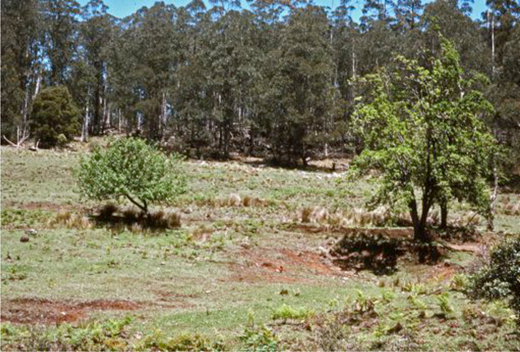 Allan's Water homestead ruins (elevation 1600 metres), dated November 1980. Photo by Neville Fenton.
