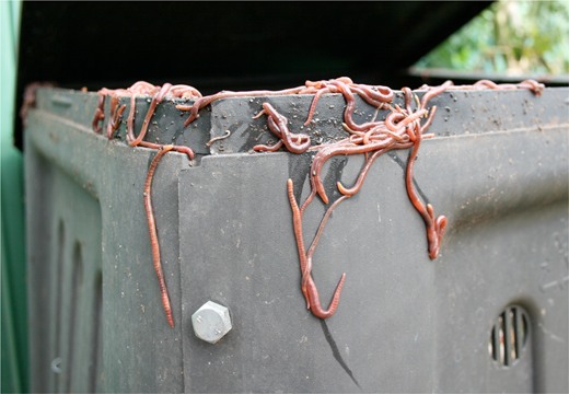 Escaping worms. Photo from Wikimedia commons.