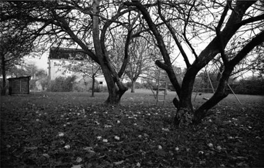 The garden, c. 1978.