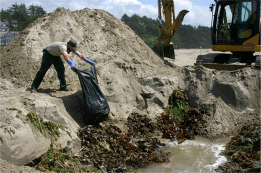 An Oregon Parks and Recreation Department worker empties a bag of organisms into the hole. Photo: Oregon Parks and Recreation Department.
