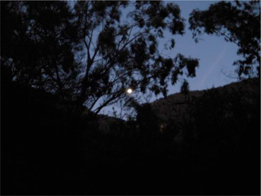 Dark night in Micalong Creek. Image courtesy of Lesley Instone.