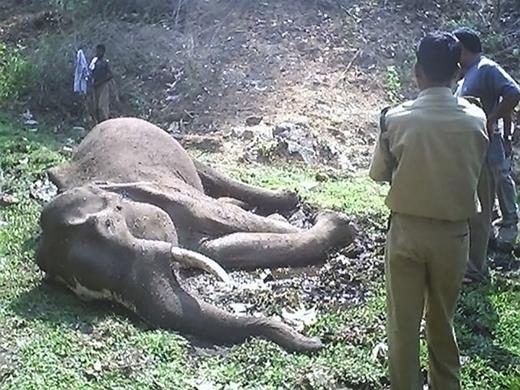 Elephant carcass at the wildlife sanctuary. Courtesy of Arun Zachariah