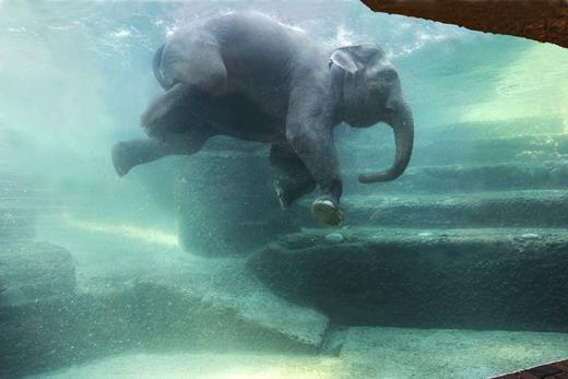 Elephant wellness at Zoo Zürich. Courtesy of Zoo Zürich, picture by Jean-Luc Grossmann