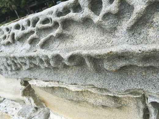 Weathering of sandstone blocks in the Elizabeth Bay seawall. Photograph by the author