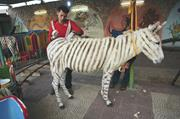 """Donkey-zebra, from Malkit Shoshan's project """"ZOO or the Letter Z, just afte..."""
