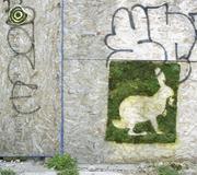 Eco-graffiti by mosstika in Brooklyn. <b>Photograph</b> by Jaime Rojo. © Brooklyn ...