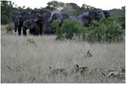 <b>Animals</b> often act in solidarity to protect vulnerable members of their comm...