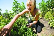 Kat Morgan  An organic-farmer-in-training tends plants at Urban Adamah in B...